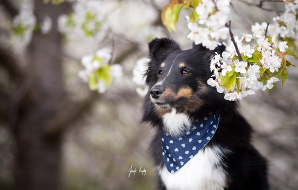 Фото обои друг, весна, собака