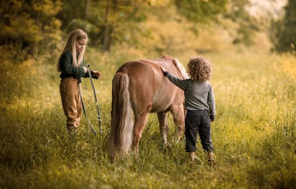 Картинка лето, природа, дети, детство, настроение, лошадь, мальчик, деревня, луг, дружба, девочка, пони, кудрявый, былое, ребятишки, …