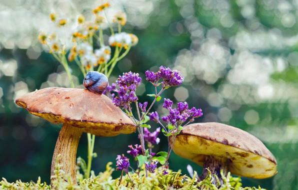 Картинка макро, цветы, природа, грибы, мох, улитка, боке