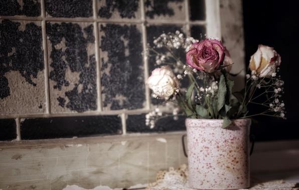 Картинка цветы, фон, горшок