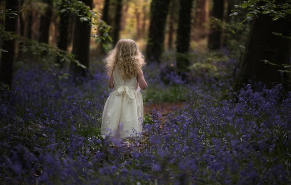 Картинка лес, цветы, девочка, колокольчики, кудри