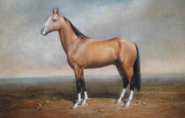 Картинка степь, лошадка, Айбек Бегалин, 2008г., «Ахалтекинец Гаухар»