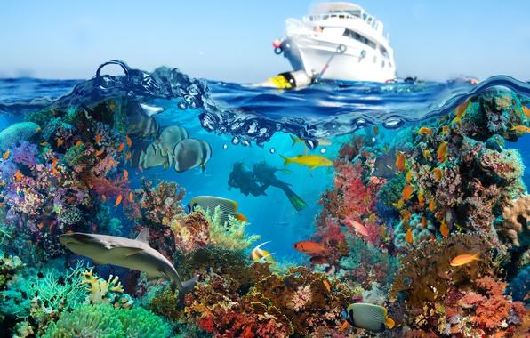Фото обои Рыбы, Яхта, Кораллы, Дайвинг, Животные, Подводный Мир