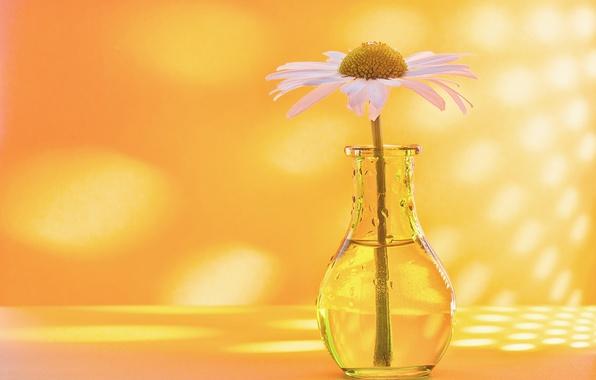 Картинка фон, ромашка, вазочка, бутылочка