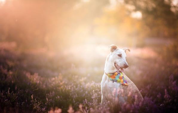 Картинка свет, природа, собака
