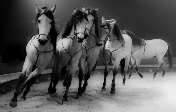 Картинка фон, кони, лошади, цИрк