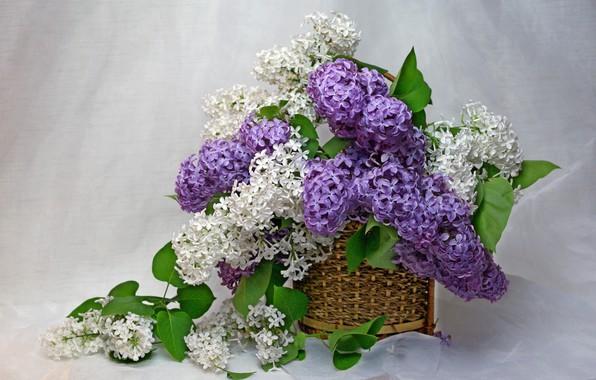 Картинка цветы, дом, красота, весна, май, ваза, натюрморт, сирень, букетик, сиреневый цвет, флора, букеты