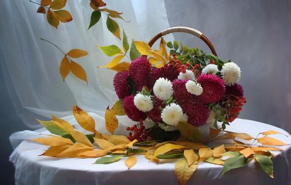 Картинка осень, листья, цветы, натюрморт, рябина, сентябрь, астры