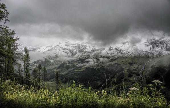 Картинка горы, природа, туман