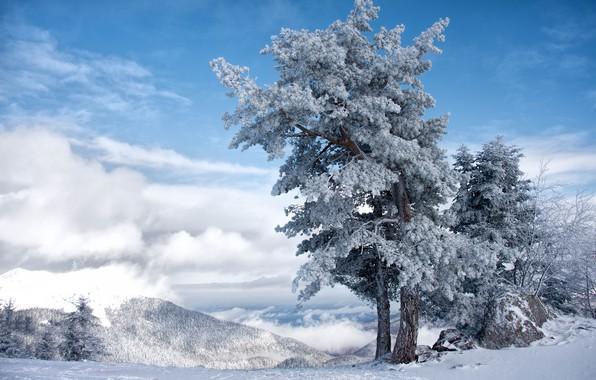 Картинка Небо, Зима, Дерево
