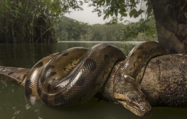 Картинка вода, природа, змея, ветка