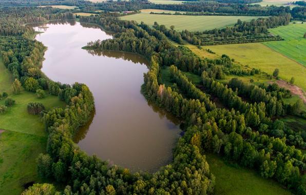 Картинка лес, деревья, озеро, поля, Эстония, вид сверху, Lake Kuuni