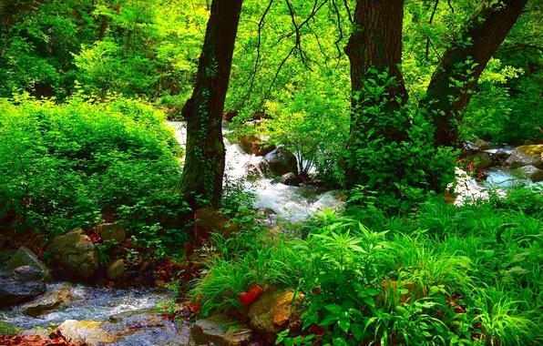 Картинка Природа, Лес, Лето, Nature, Речка, Summer, River, Forest