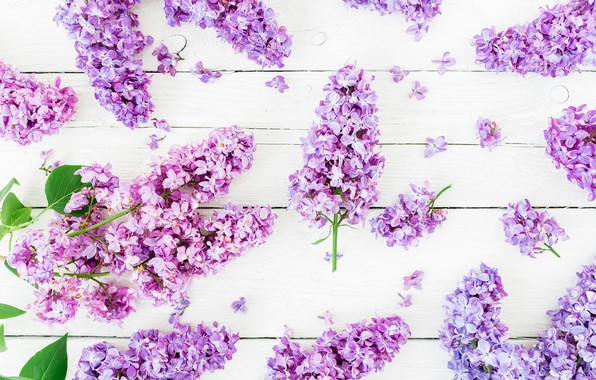 Картинка цветы, весна, flowers, сирень, lilac