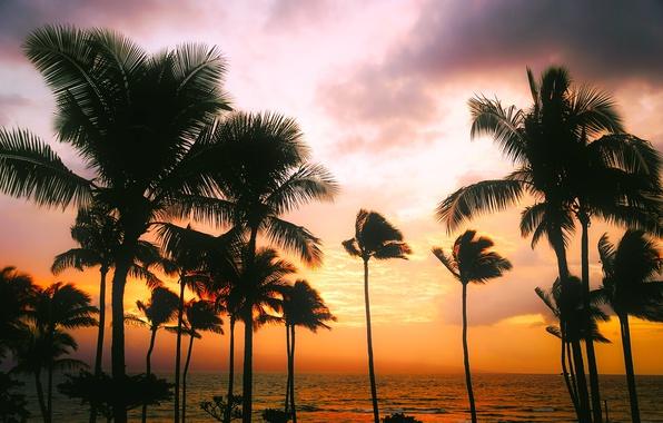Картинка море, небо, закат, тропики, пальмы, вечер, горизонт, Гавайи