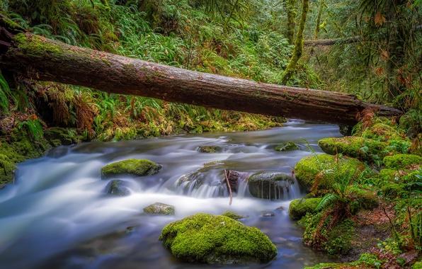 Картинка зелень, лес, деревья, ручей, мох, Канада