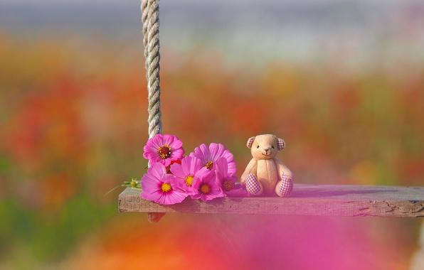Картинка цветы, качели, настроение, игрушка, медвежонок, боке, космея, плюшевый мишка