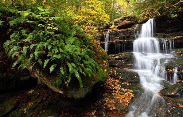 Картинка осень, лес, водопад, Пенсильвания, папоротник, каскад, Pennsylvania, Ricketts Glen State Park