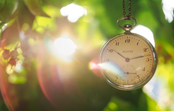 Картинка листья, солнце, часы, циферблат, цепочка