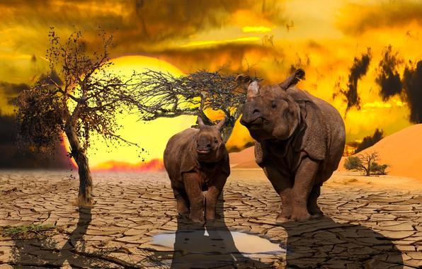 Картинка пара, animal, носороги