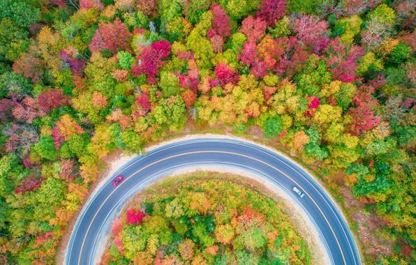 Картинка дорога, осень, лес, деревья, машины, природа, вид сверху