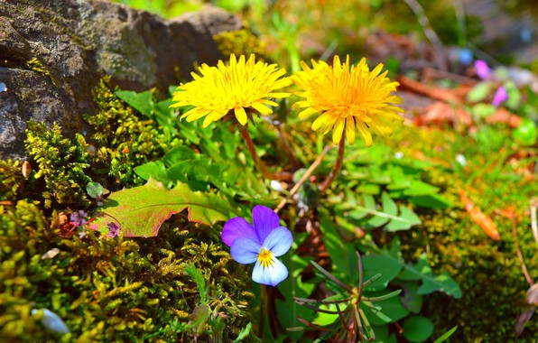Картинка Весна, Цветочки, Nature, Flowers, Spring