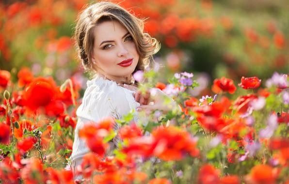 Картинка поле, лето, взгляд, девушка, цветы, маки, руки, макияж, прическа, фотосессия, боке