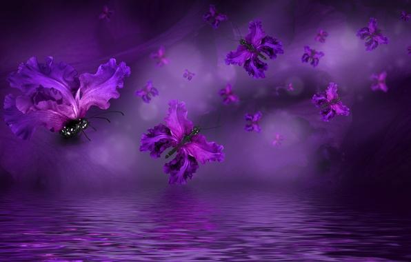 Картинка бабочки, лепестки, water, purple, butterflies, floral