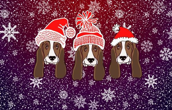 Картинка Зима, Минимализм, Снег, Рождество, Фон, Новый год, Морды, Праздник, Настроение, 2018, Шапки, Год Собаки