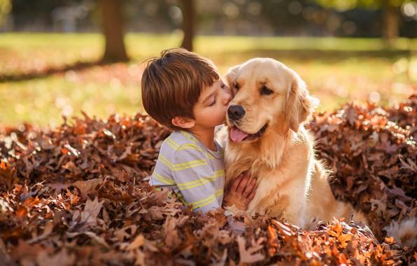 Картинка осень, листья, листва, собака, мальчик, дружба, друзья, Голден ретривер, Золотистый ретривер