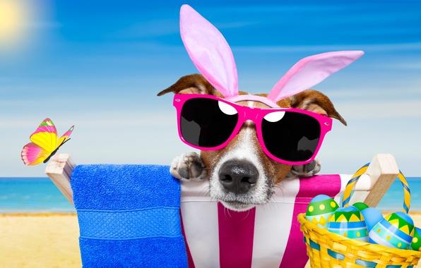 Картинка пляж, бабочки, собака, очки, happy, beach, dog, Easter, eggs, funny, vacation, sunglasses, bunny ears