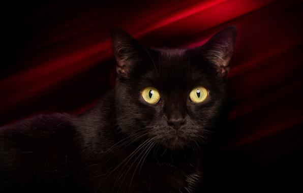 Картинка глаза, кот, усы, взгляд, фон, черный, котейка