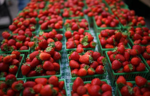 Картинка ягоды, клубника, красная, много