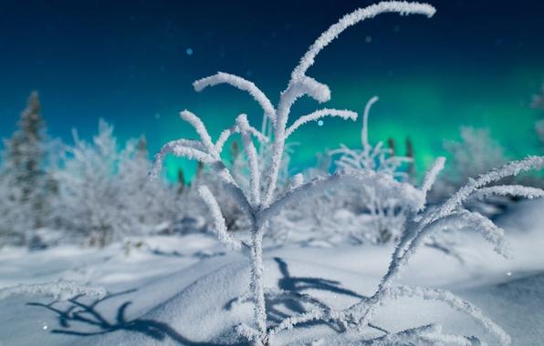 Картинка зима, лес, свет, снег, ночь, ветки, природа, северное сияние, север, боке