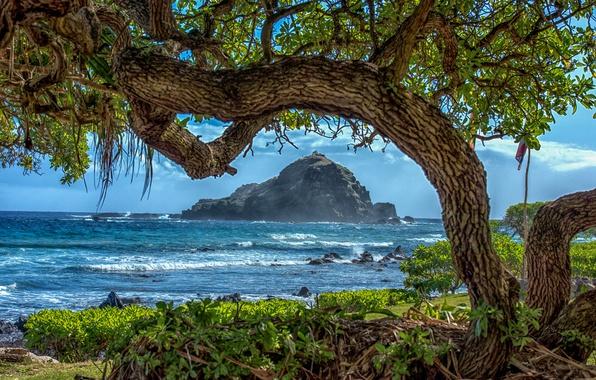 Картинка море, деревья, ветки, тропики, камни, скалы, побережье, Гавайи, прибой, США, солнечно, кусты, остров Мауи, рифы, ...