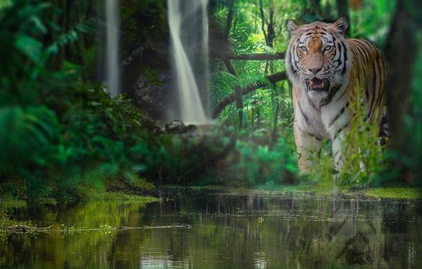 Картинка лес, вода, тигр, водопад, джунгли, дикая кошка