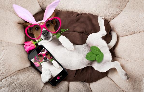 Картинка роза, собака, очки, сердечки, rose, уши, happy, pink, dog, holiday, funny, bunny ears