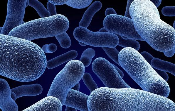 Картинка микроскоп, бактерии, микроорганизмы, микробы