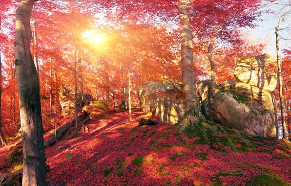 Картинка осень, лес, листья, солнце, деревья, горы, камни, мох, Украина, Закарпатье