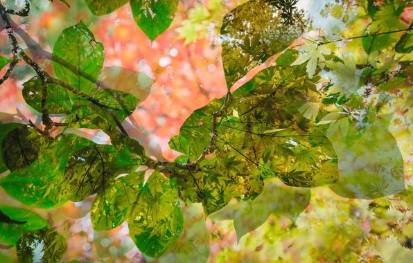 Картинка листья, природа, текстура
