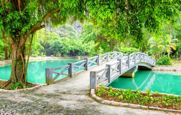 Картинка зелень, деревья, ветки, пруд, парк, листва, Вьетнам, мостик, Province, Ниньбинь, Ninh Binh