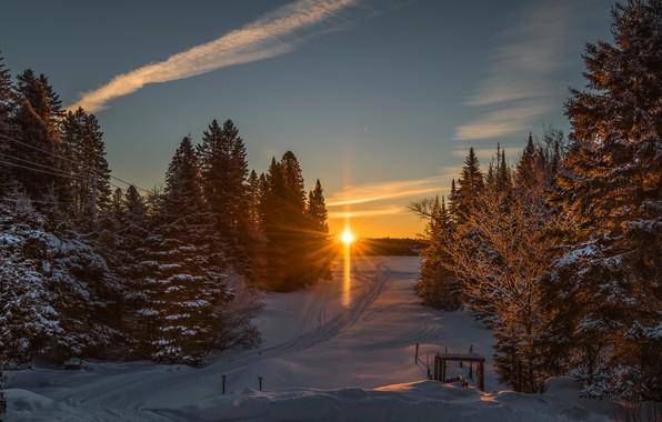 Картинка зима, дорога, лес, солнце, снег, закат, ели