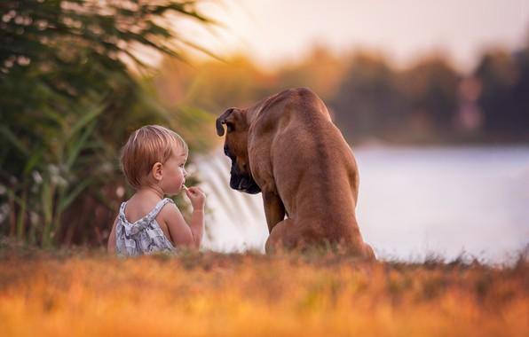 Картинка собака, девочка, друзья, малышка, боке, боксёр