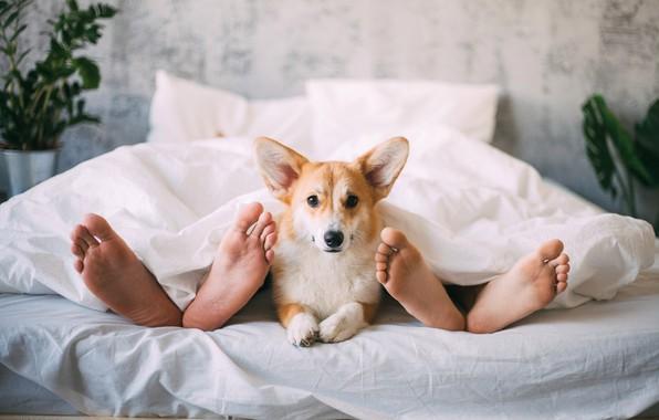 Картинка ноги, собака, постель