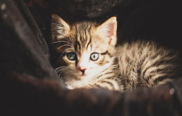 Картинка взгляд, малыш, котёнок