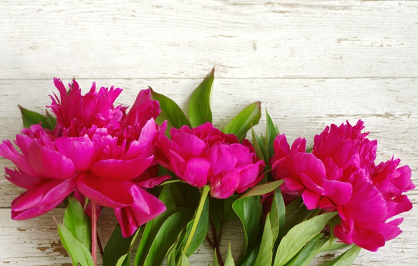 Картинка розовые, wood, pink, flowers, beautiful, пионы, peony