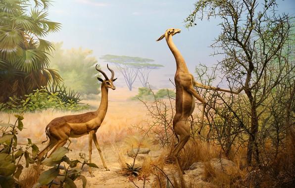 Картинка животные, парк, картина, Сан-Франциско, Золотые ворота, Калифорнийская академия наук