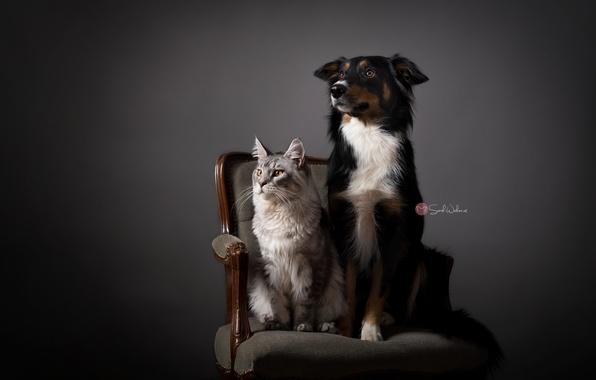 Картинка кошка, дом, собака