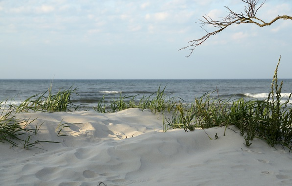 Картинка grass, beach, seascape, sand, seaside, branch