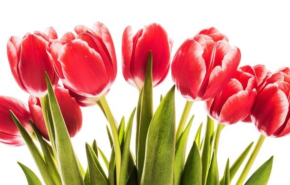 Картинка цветы, тюльпаны, red, love, wood, romantic, tulips, spring, красные тюльпаны